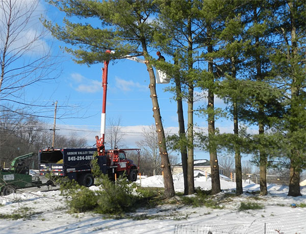 tree removal orange county ny