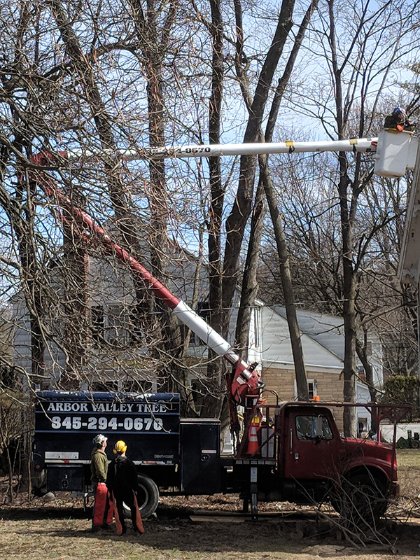 Arbor-Valley-Tree-Service---Orange-County-NY---Trimming-Branches.jpg